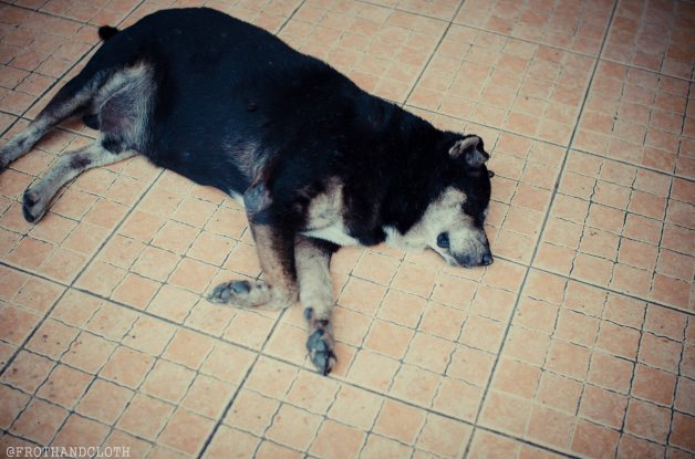 Dog Bangkok